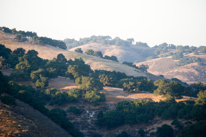 The Lush Santa Ynez Valley