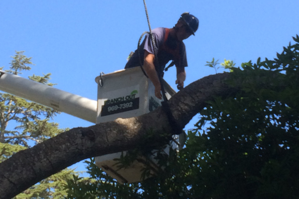 Santa Barbara Estate Tree Care