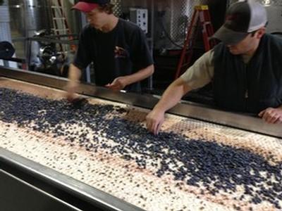 Philosophy of making Jamie Slone Wines wine