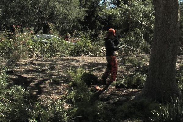 Santa Barbara Estate Tree Care