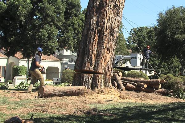 Santa Barbara Commercial Tree Service
