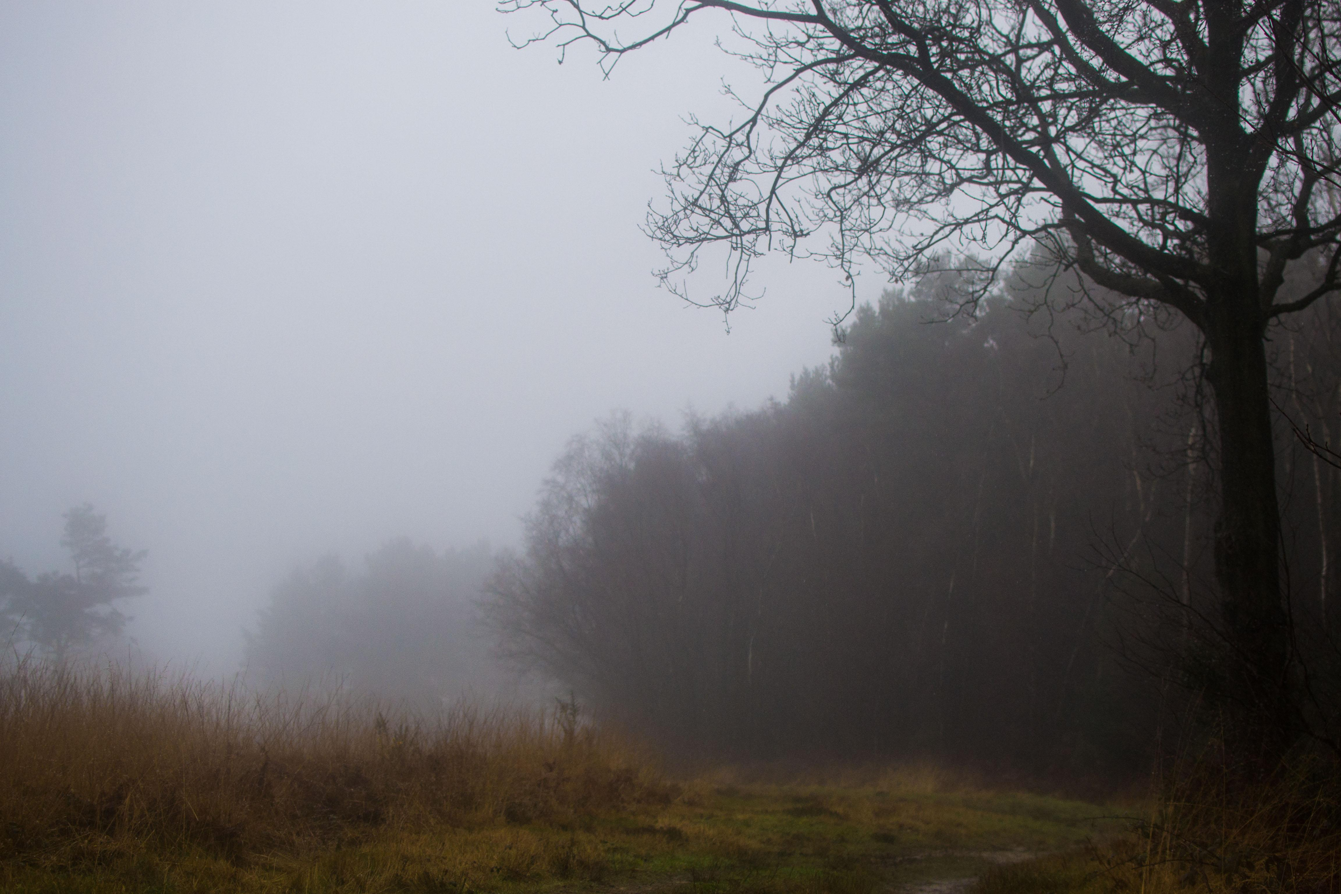 Misty Forest  - image 1 - student project