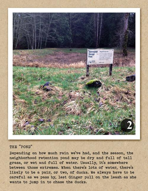 Ginger's Daily Walk - Adventures of a Golden Retriever in Pacific NW Suburbia - image 9 - student project
