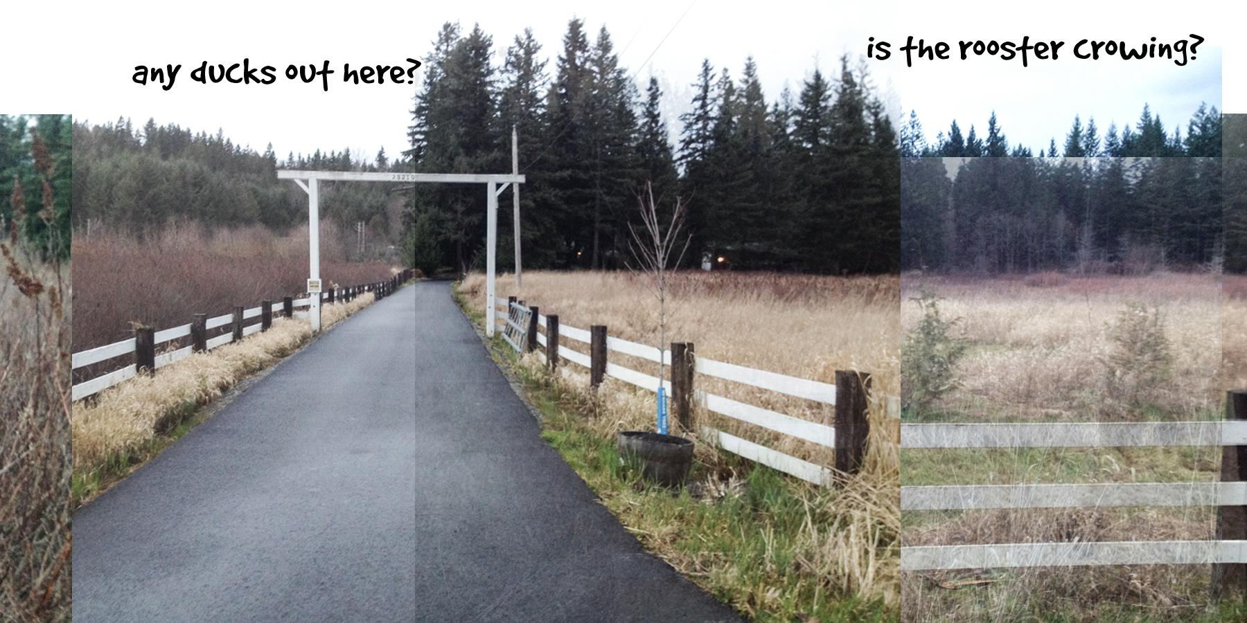 Ginger's Daily Walk - Adventures of a Golden Retriever in Pacific NW Suburbia - image 2 - student project