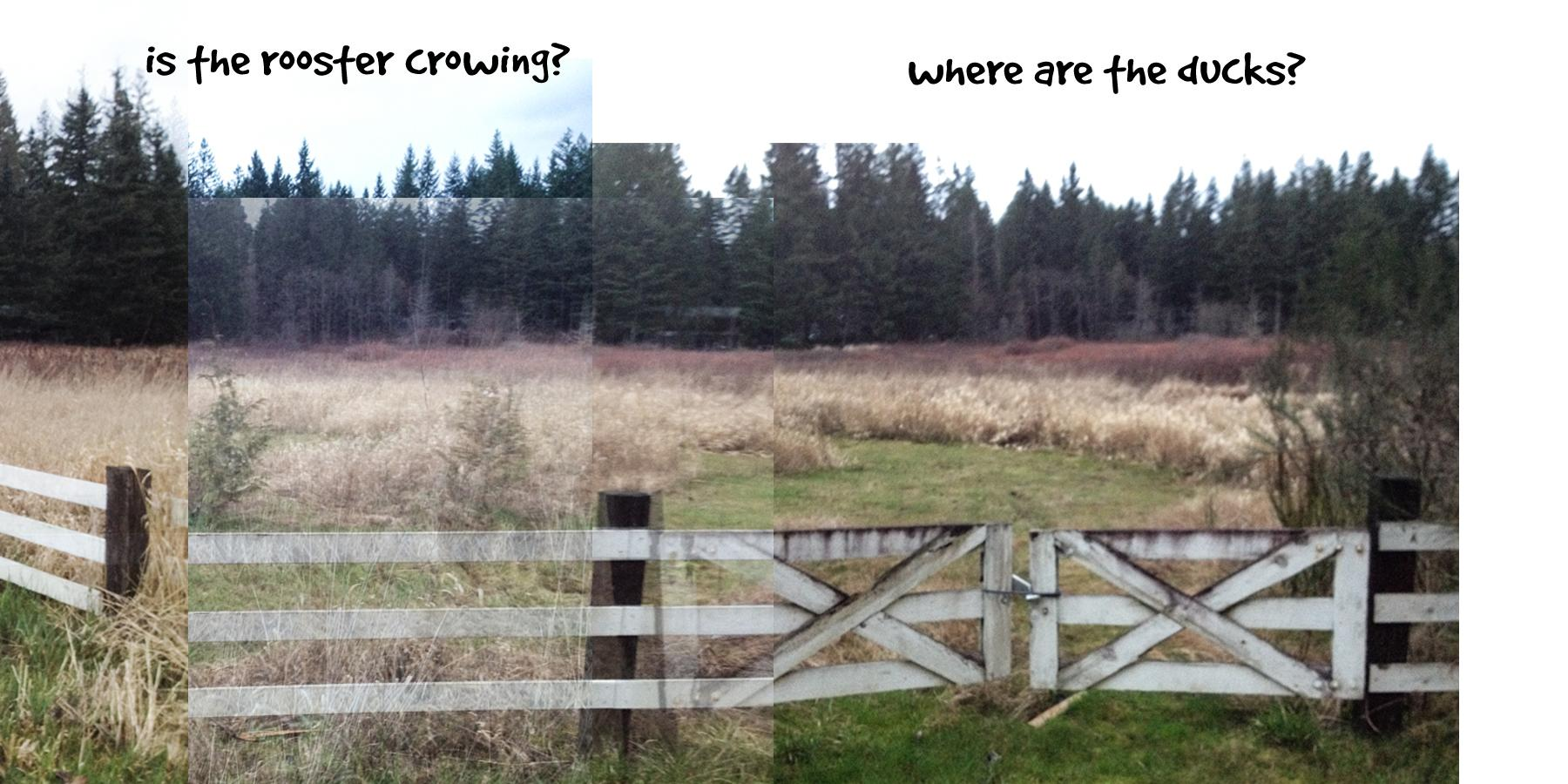 Ginger's Daily Walk - Adventures of a Golden Retriever in Pacific NW Suburbia - image 3 - student project