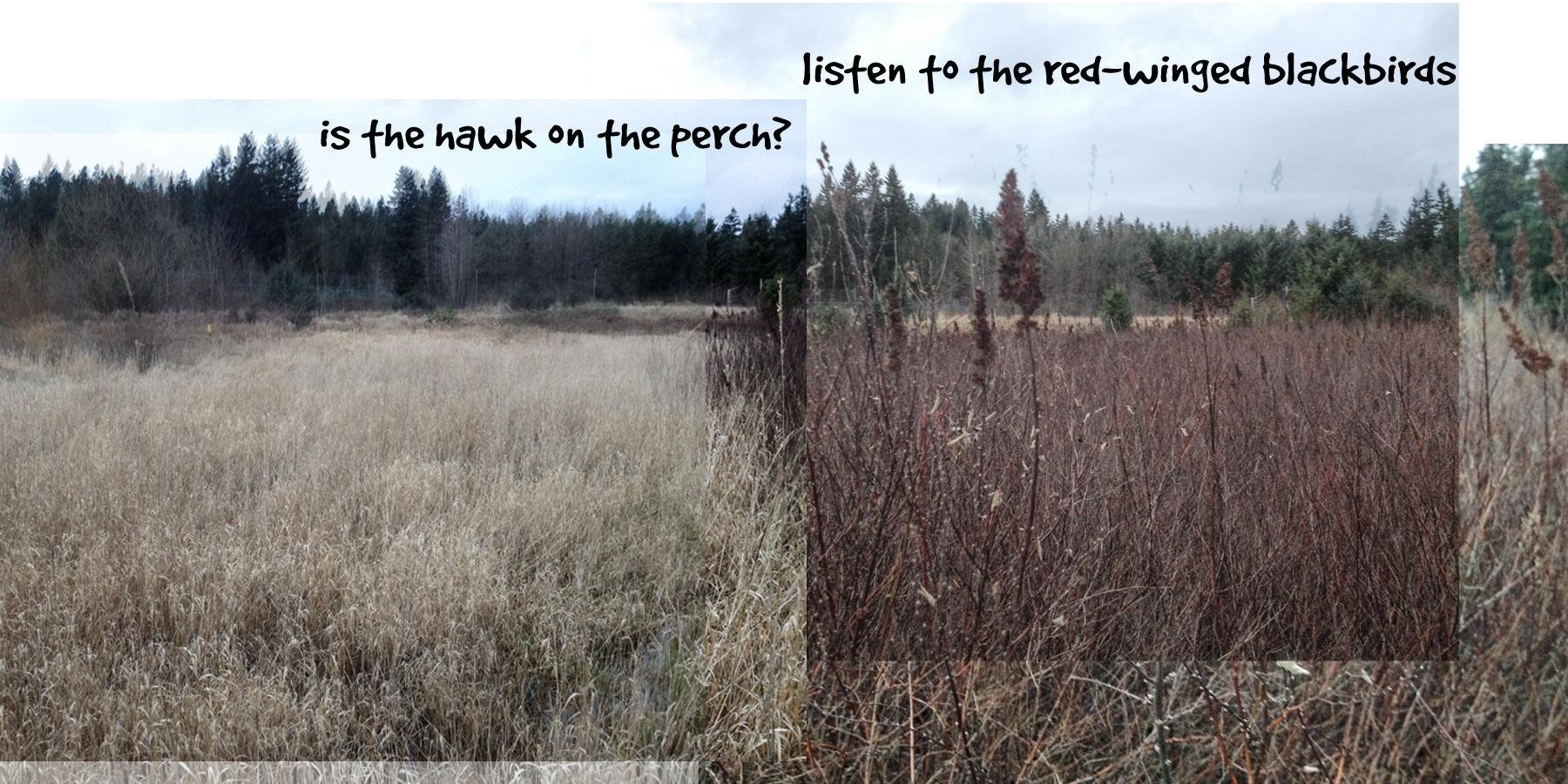 Ginger's Daily Walk - Adventures of a Golden Retriever in Pacific NW Suburbia - image 1 - student project