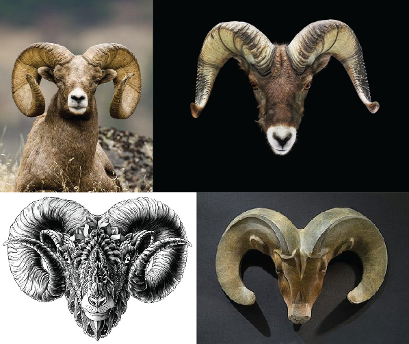 Bighorn Sheep - image 1 - student project