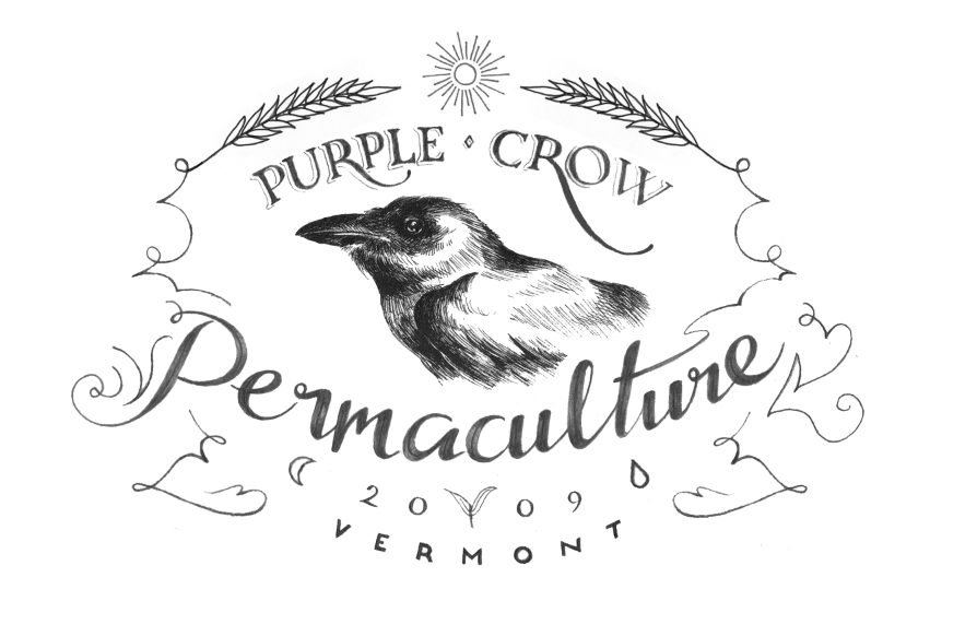 Purple Crow Permaculture - image 11 - student project