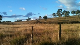 Tracey Gobey - Paddocks of Kurrajong: A patchwork of an Australian farm
