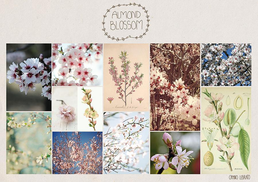 Almond Blossom - image 1 - student project