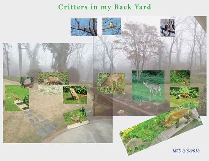 Critters in My Back Yard -- Next Round - image 2 - student project