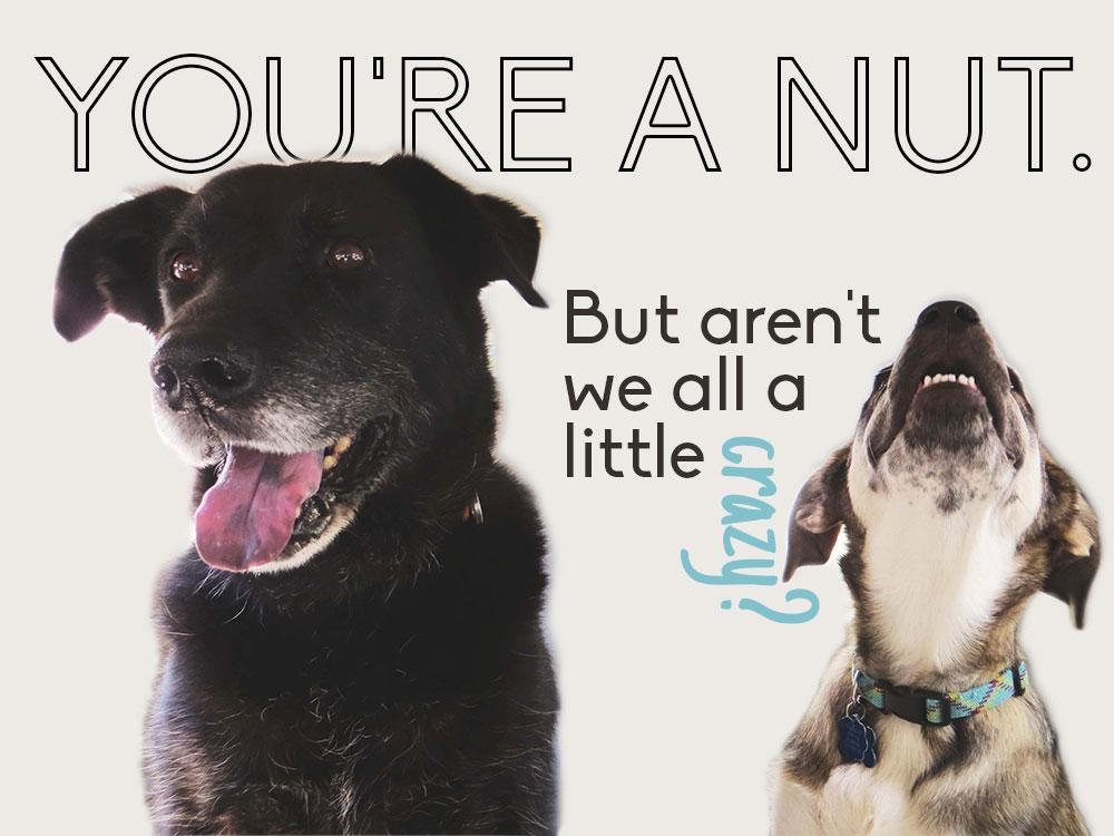 You're a nut. - image 1 - student project