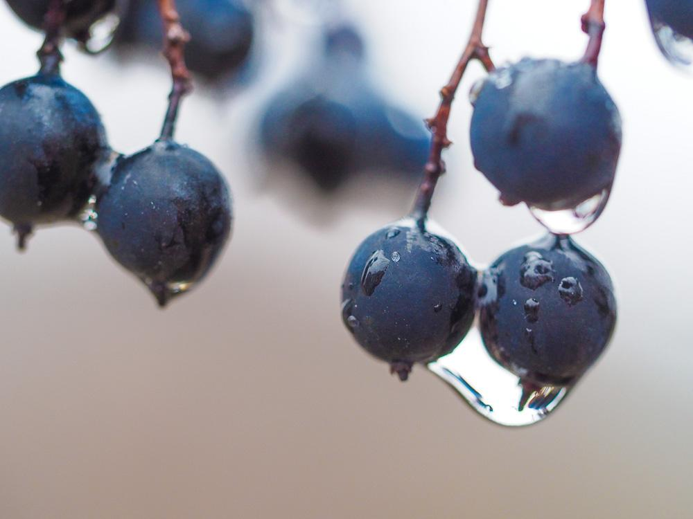 Droplets - image 12 - student project