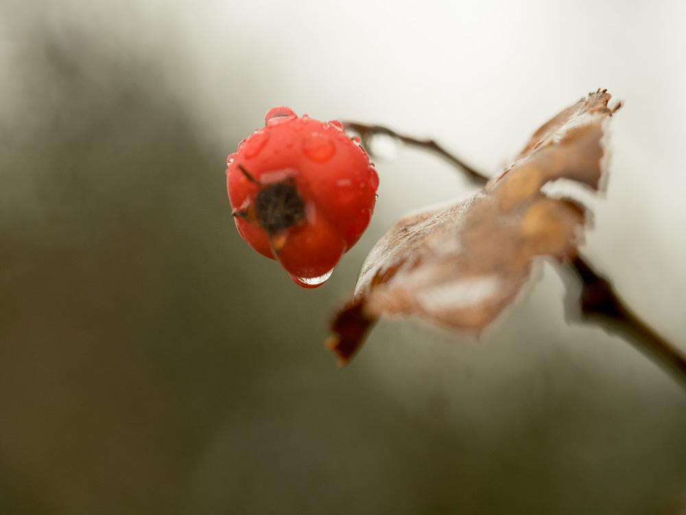 Droplets - image 10 - student project