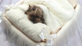 Кроватка для собачки