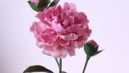 Розовый пион с бутонами