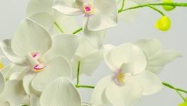 Цветы орхидеи на стебле.