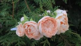 Ободок с пионами персик