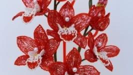 Красная орхидея ′Star′