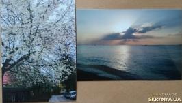 Фото картины: Море рассвет и Цветы