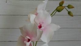 Інтер′єрна орхідея