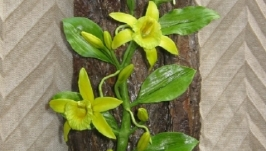 Панно с ванильной орхидеей, холодный фарфор