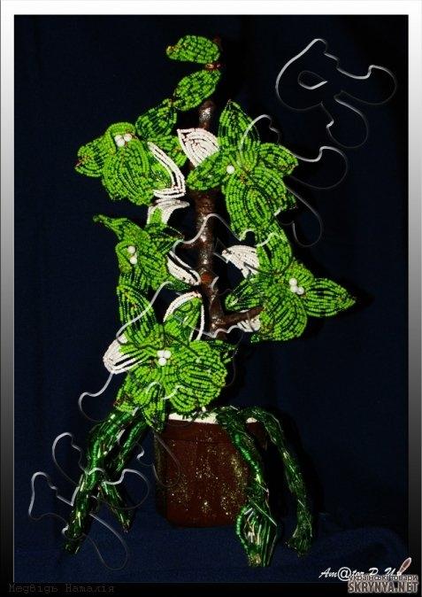 тут зображено Орхідея