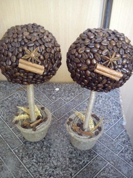 Кофейное дерево своими с корицей руками