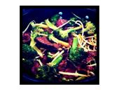 P90x Beef And Broccoli Stir Fry recipe