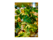 P90x Chicken Salad recipe
