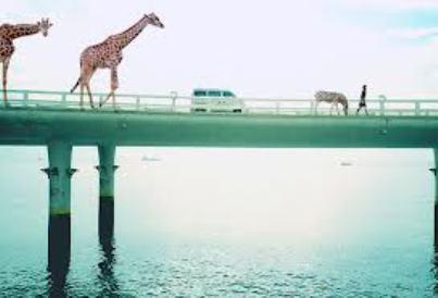 giraffe on bridge.jpg