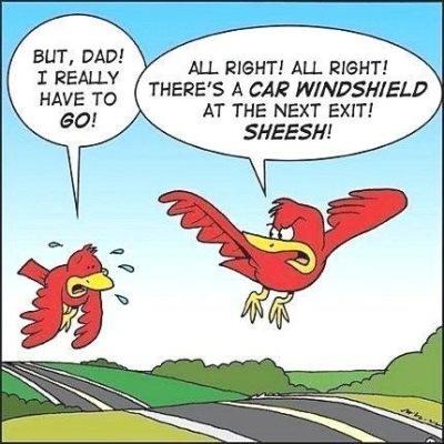 bird cartoon.jpg