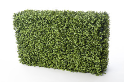 Boxwood Hedge (Short)