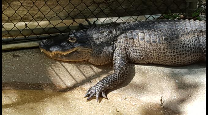 Busch Wildlife Sanctuary at Loxahatchee River District