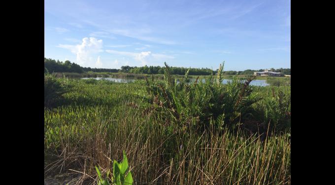 Green Cay Wetlands