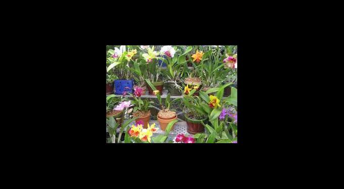Key West Tropical Forest & Botanical Garden