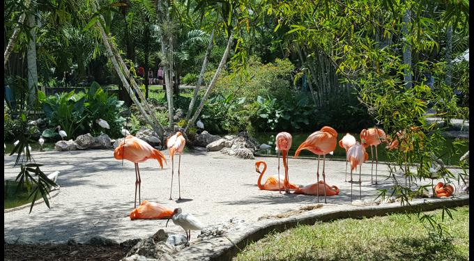 Flamingo Gardens | South Florida Finds