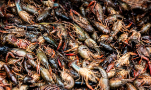 South Florida Crawfish Festival @ Pompano Beach Amphitheater Field | Pompano Beach | Florida | United States