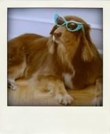 Amanda_seyfreid_finn_vogue_dot_com_a-morir_eyewear-pola