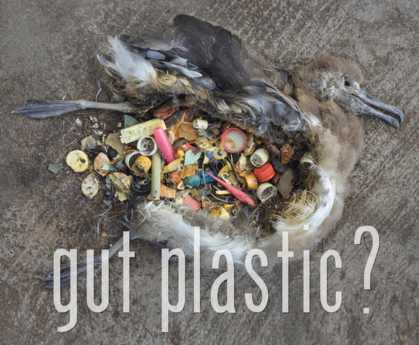 The Arctic Ocean Is Aculating A High Concentration Of Plastic Broken Down Over Time Into