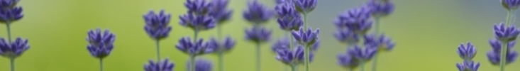 Spoon_flower_banner_preview
