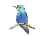 Hummingbird_thumb