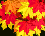 Mapleleaves_thumb