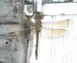 Dragonfly_thumb
