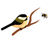 Chickadee_bumblebee_thumb