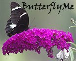 Butterflyme_thumb