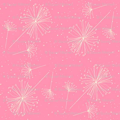 Dandelion clocks white on pink