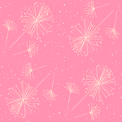 Dandelion clocks white on pink