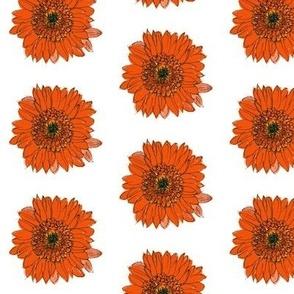 Original-Gouache-Gerber-Daisy