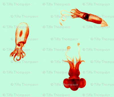 sea creatures red turquoise